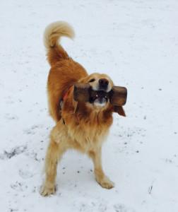 Barney-im-Schnee